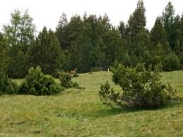 Wandern im Schweizerischen Nationalpark: Tiere in der Wildnis beobachten