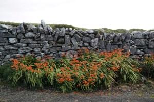 150923–Landlinien–BurrenWay-667