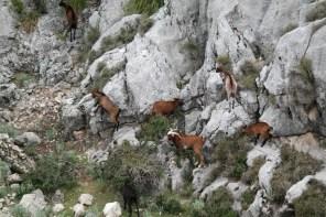 Tierreich rund um den Cuber Stausee