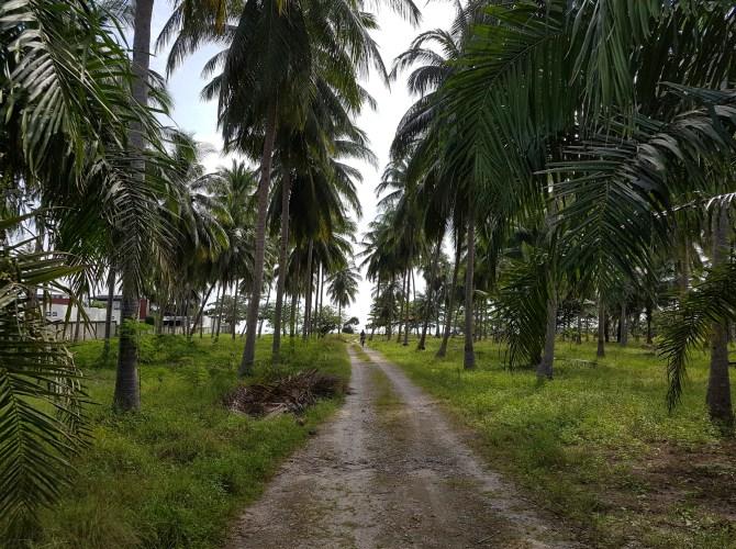 Mitten durch den Dschungel: auch das ist Khanom