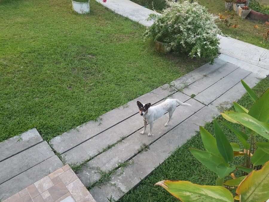 Koh Mook - unser neuer Freund