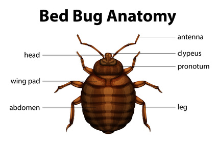 Is Your Property On A Bed Bug Registry Landlord By Design