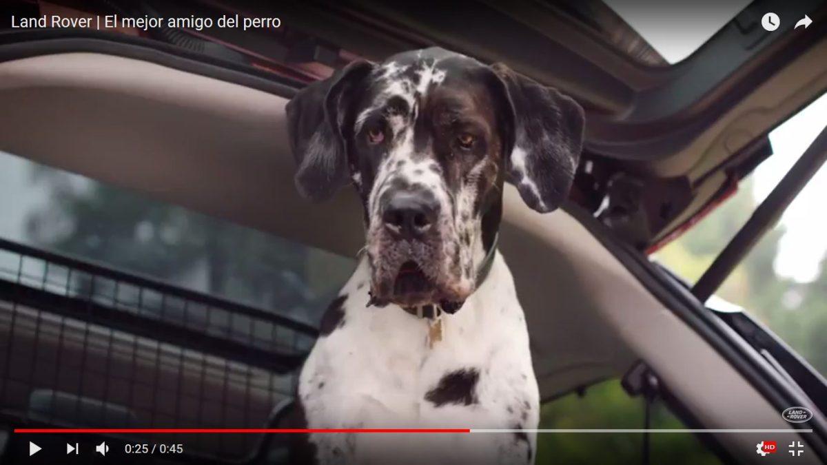 Vidéos: Land Rover et les chiens, une histoire de passion