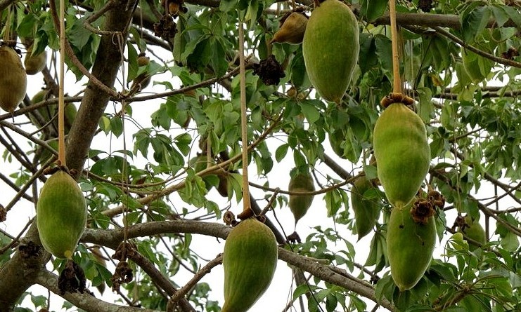 LWN - Baobab featured