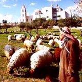 Bethlehem: Shepherd's Field