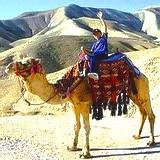 Camel riding in the Negev desert