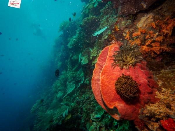 manado olympus 02 - Memilih Kamera Underwater | Underwater Photo Journey