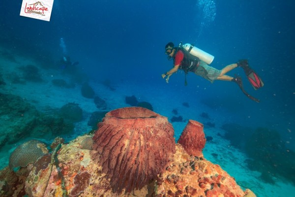 tomia dive 10 tn - Masker Diving Minus di  Wakatobi