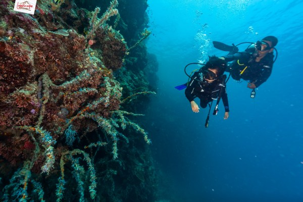 tryscuba wakatobi 09 1024x683 - Discovery Scuba Diving di Wakatobi