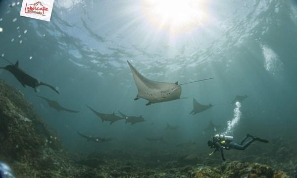 komodo 100 mantaalley 02 - Komodo Diving Log Day 100 : Ocean Full of Manta