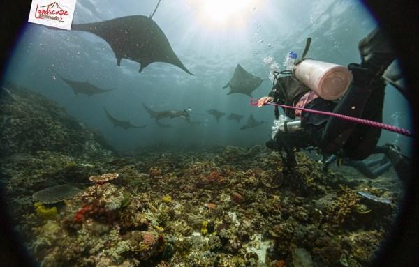 komodo 100 mantaalley 03 - Komodo Diving Log Day 100 : Ocean Full of Manta