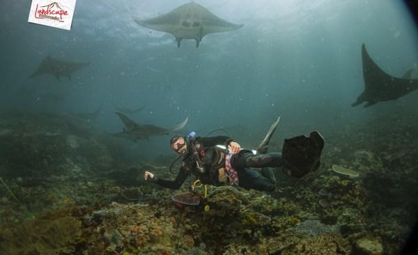 komodo 100 mantaalley 05 - Komodo Diving Log Day 100 : Ocean Full of Manta