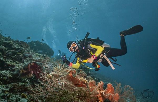 komodo 102 25 - Test Samyang 14mm vs Samyang Fisheye 8mm Untuk Underwater