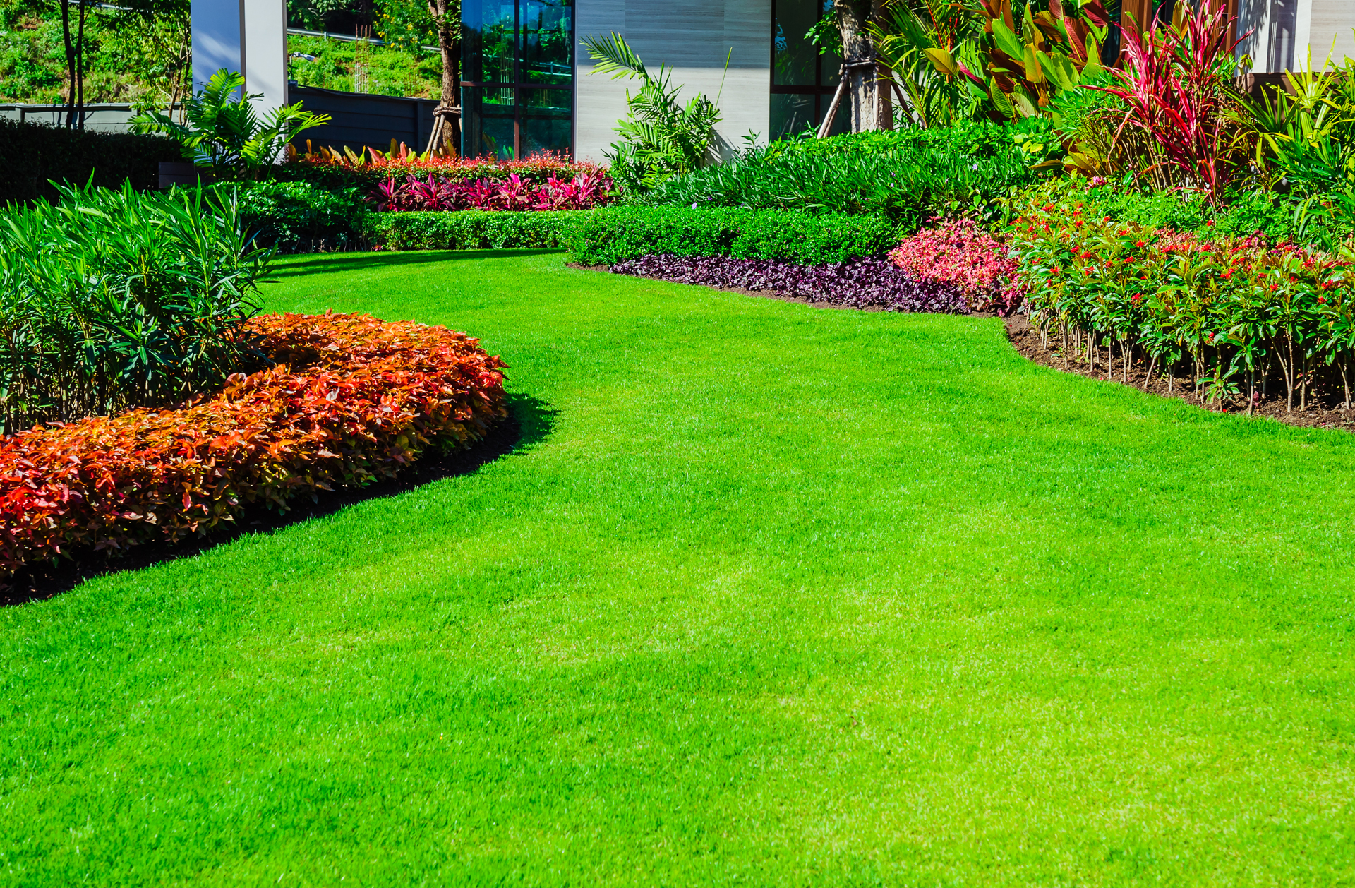 Zeon And Other Hybrid Zoysia Grasses