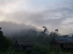 Morning breeze in Borneo