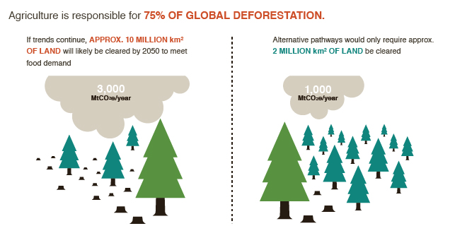 Food_Emissions_Emissions_Forestry_Land_Use-01