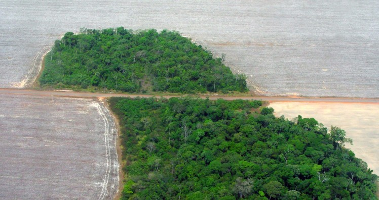 Turning down subsidies for deforestation commodities to advance REDD+ and stop deforestation