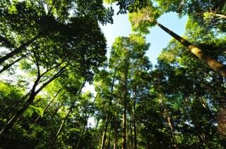 Wald_Panama