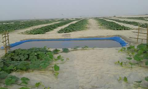 In the sandbars, farmers dig temporary reservoirs to collect rainwater and source water from the floodplain itself.