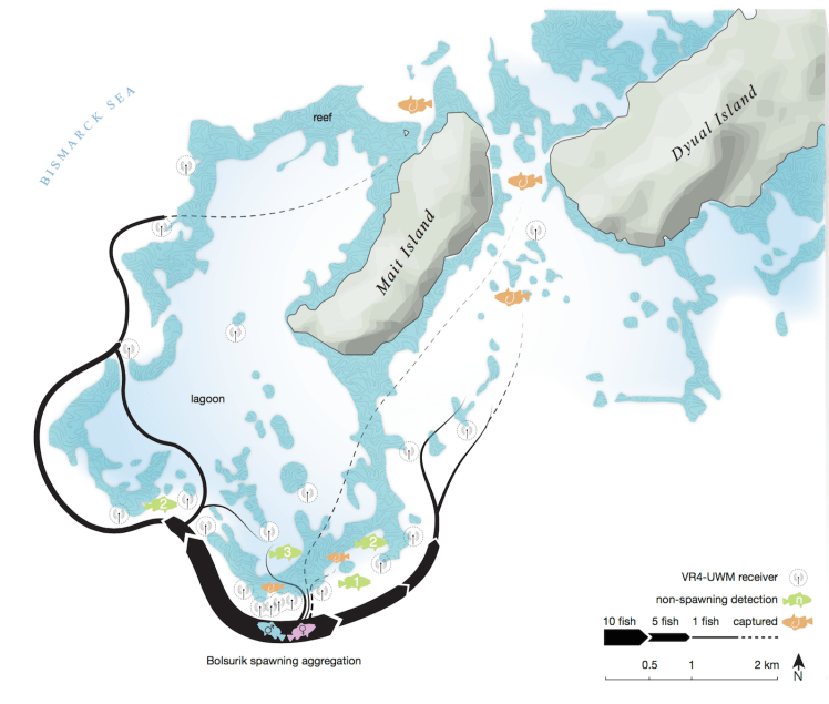 Locations of acoustic receivers and fish detections. Graphic © Waldie, P., et al (2016). Restricted grouper reproductive migrations support community-based management. Royal Society Open Science.
