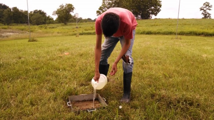 Jorge, an undergraduate from the University of Puerto Rico-Mayagüez, demonstrating the hot mustard earthworm extraction method.
