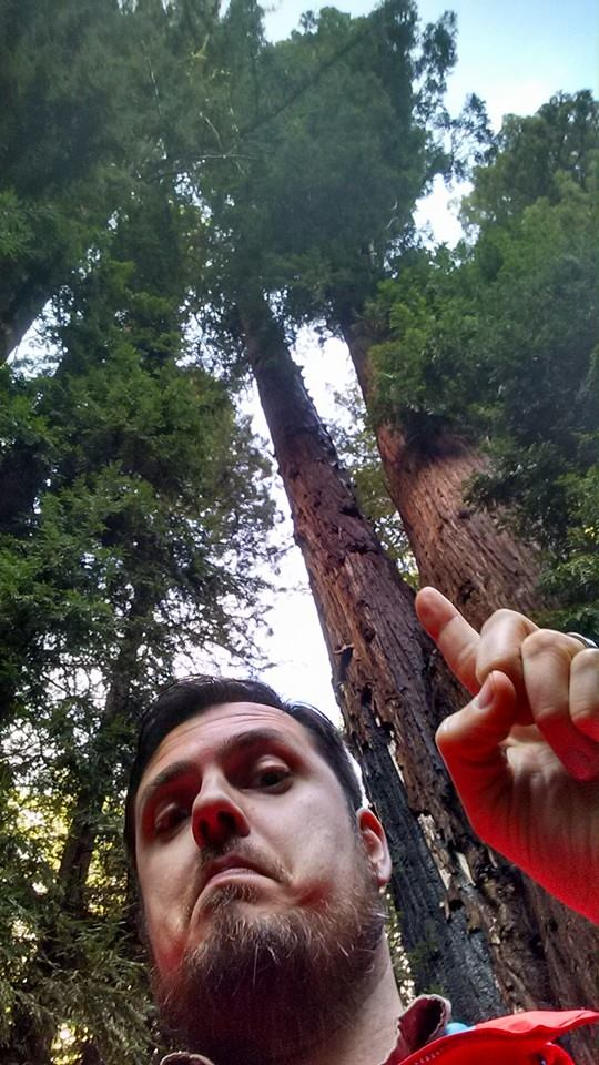 Some trees can be really, really tall.