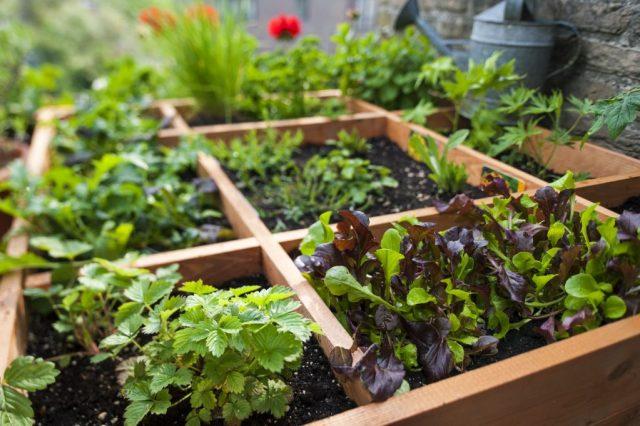 Terrace Garden Gardening Landscaping Solutions