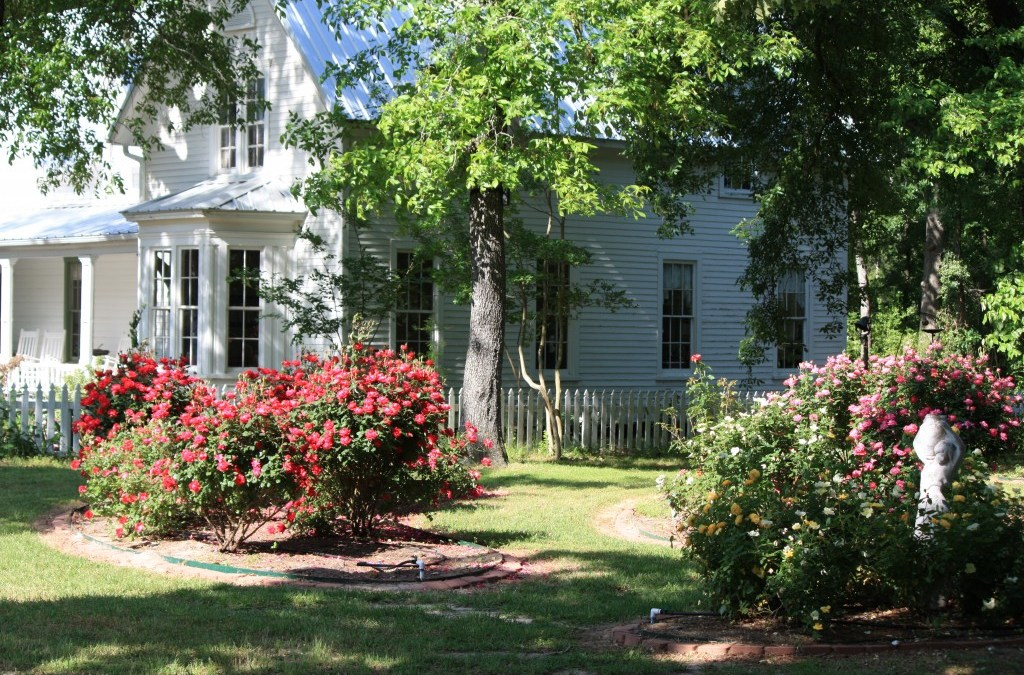 Bare Root Tree Sale in Quitman