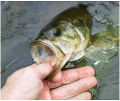 Lake Fork named top bass fishing spot in US