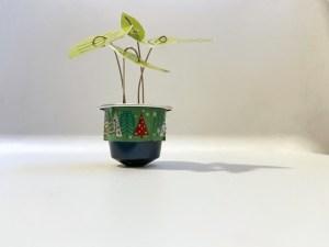 pianta verde con capsula del caffè