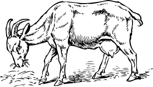 Goat grazing permit
