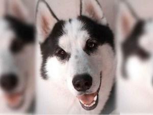 """""""Hachi"""" el perro que salvó a su amo de una serpiente en Nuevo León"""