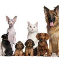 Mascotas: Alimentación y accesorios