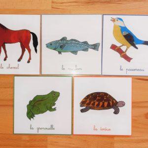 Nomenclatures zoologie Montessori 3-6 ans