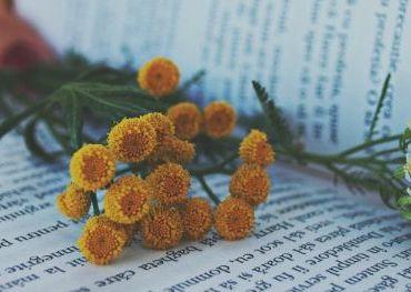 consigli di lettura l angolo dei libri