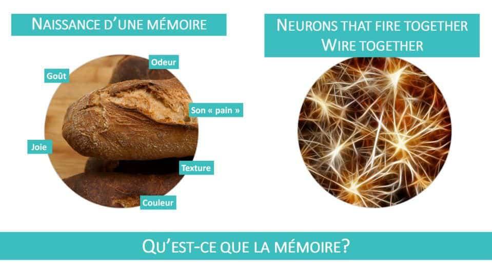Une information mémorisée, un souvenir, c'est un réseau unique de neurones connectés entre eux dans le cerveau, un réseau qui s'est formé au moment où le souvenir a été créé.