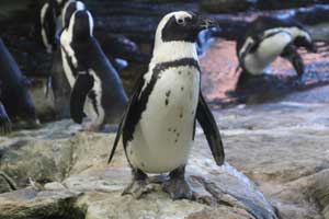 translation services for zoological visitors