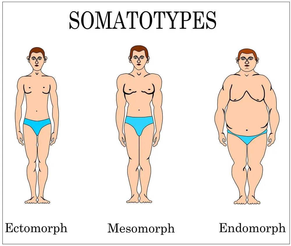 Somatotypes