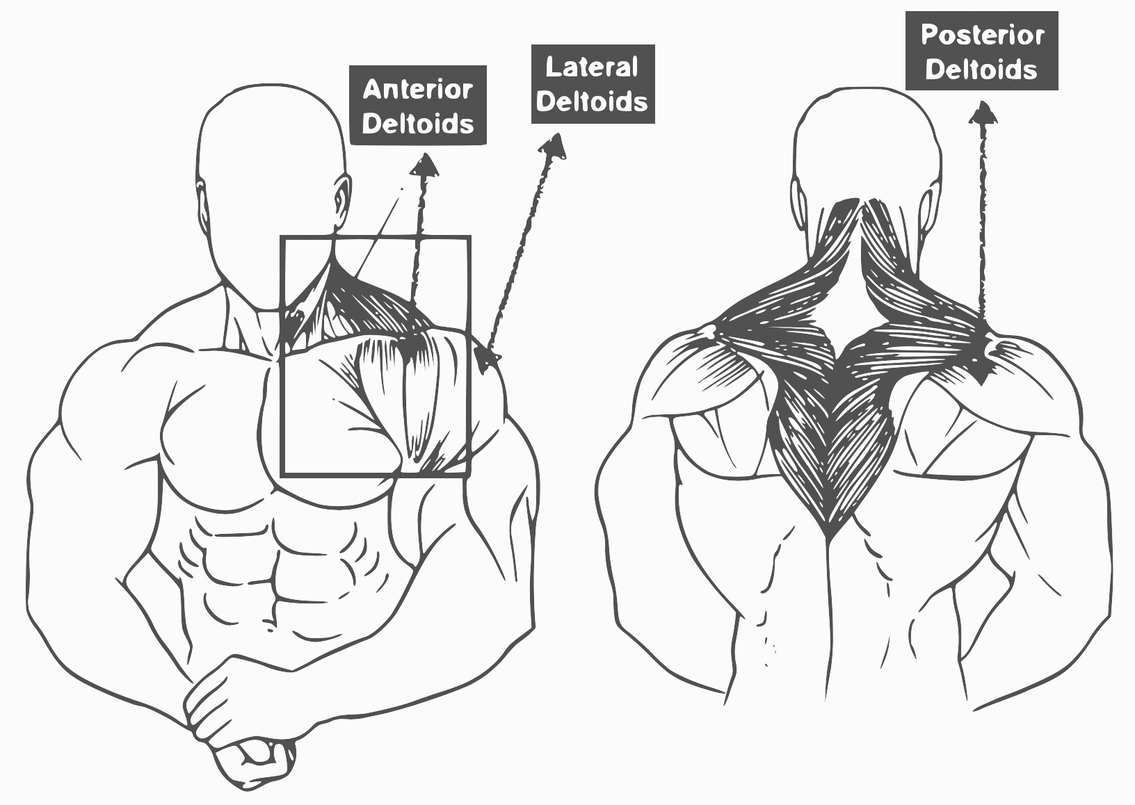 Shoulder Workouts 10 Best Shoulder Exercise For Muscle