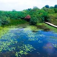 Diyasaru Park - Thalawathugoda
