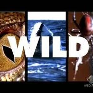 Wild Italia Uno