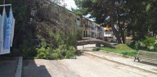 pino-caduta-albero