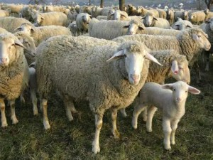 Livestock & Farm Animals