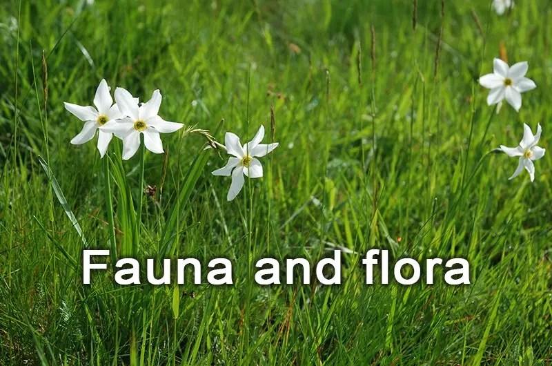 fauna-flora-en