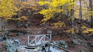 ponte durante il foliage