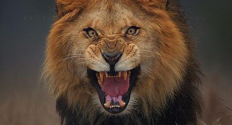 León ataca a cuidador de Zoológico enfrente de los visitantes