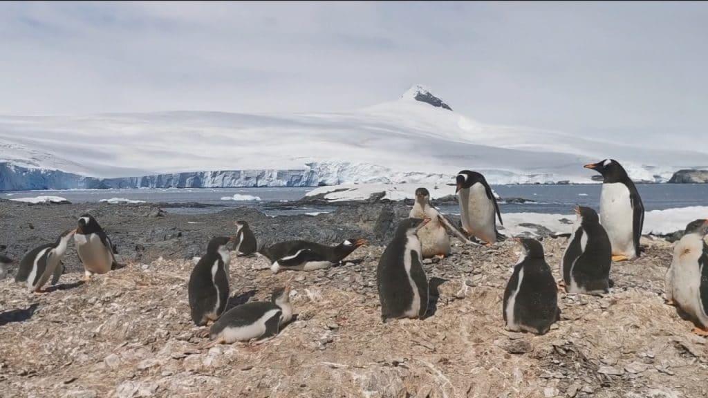 Se registra por primera vez una 'ola de calor' en la Antártida ...