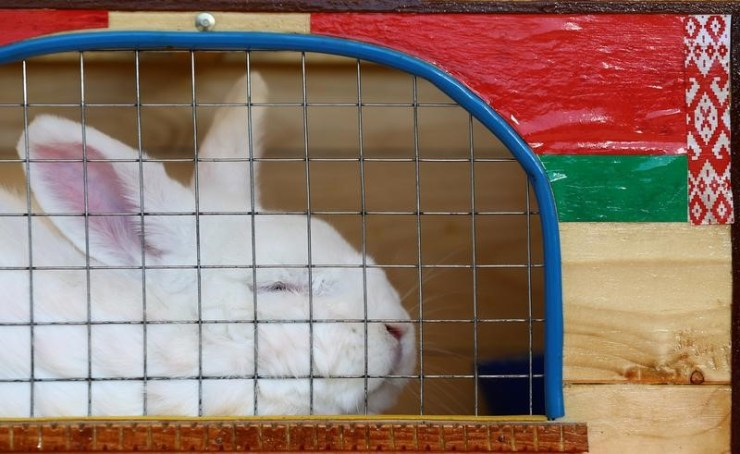 En la imagen se ve un conejo en una jaula de una exposición agrícola el 6 de junio de 2017. REUTERS/Vasily Fedosenko