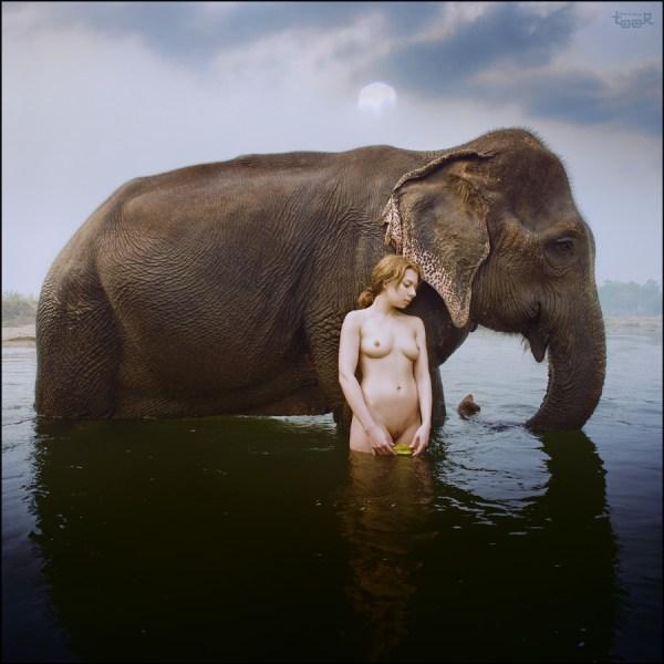 Anatoli Toor - elefantes (3)