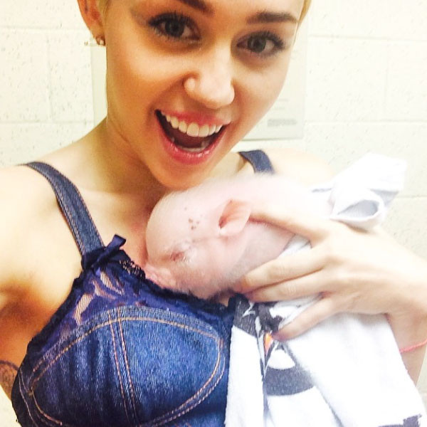 Miley Cyrus mascota